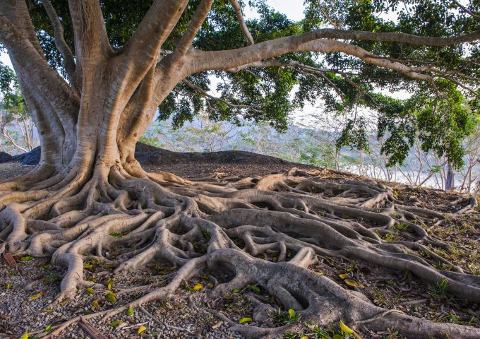 albero - alberi e cinema