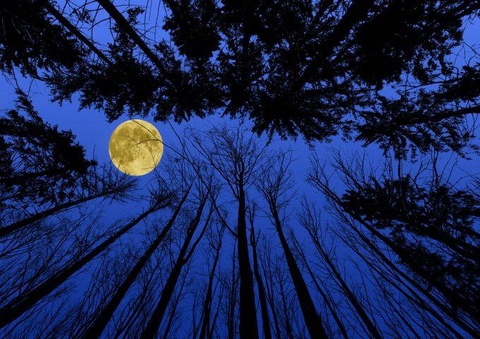 alberi della Luna